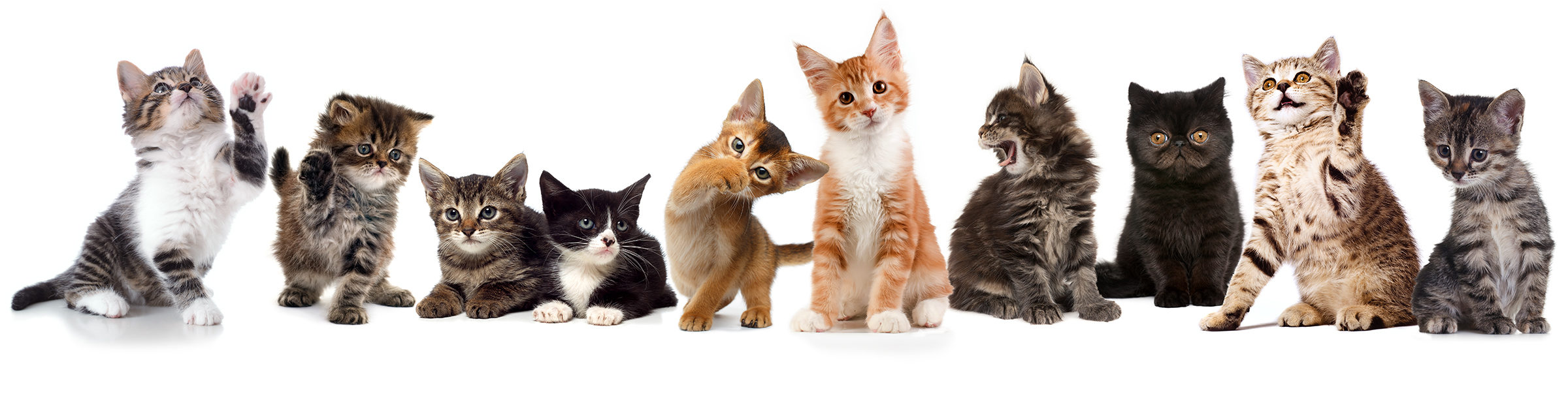 Ten kittens