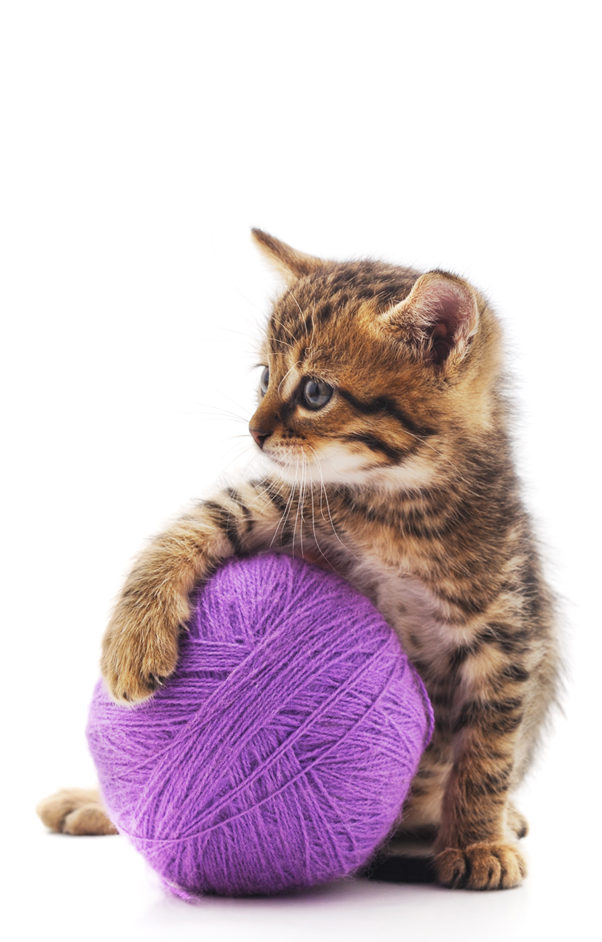 kitten with a purple ball of yarn