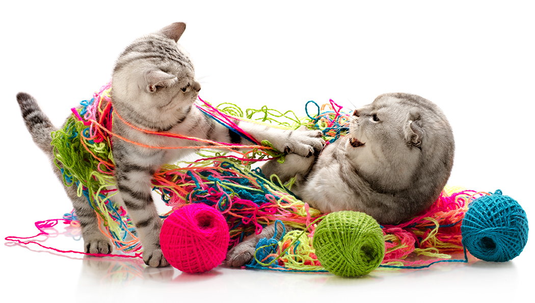 kitten tussles with an adult cat amidst skeins of yarn