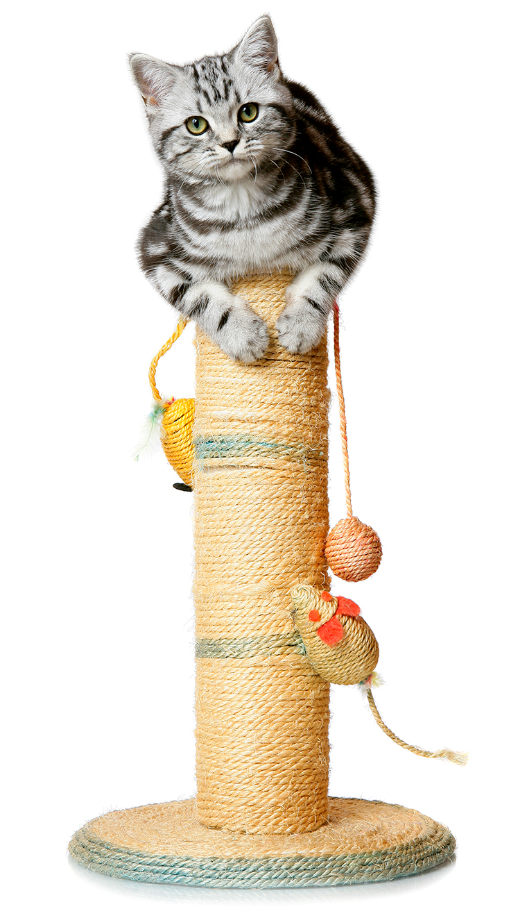 tabby cat sitting atop a scratching post
